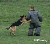 Photo of K-9 in Training