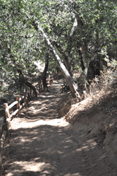Coyote Trail Restoration Project Photo