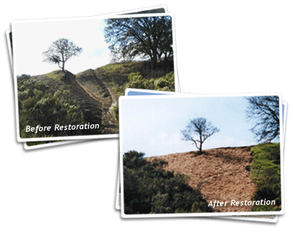 Oak Tree Restoration Photos