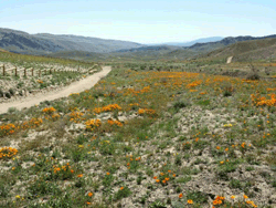 Hungry Valley SVRA Grasslands Photo